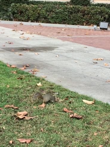 다람쥐녀석!